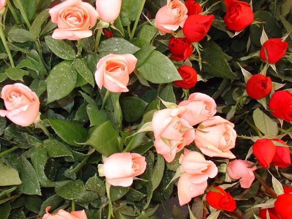 virágküldő szolgálat debrecen