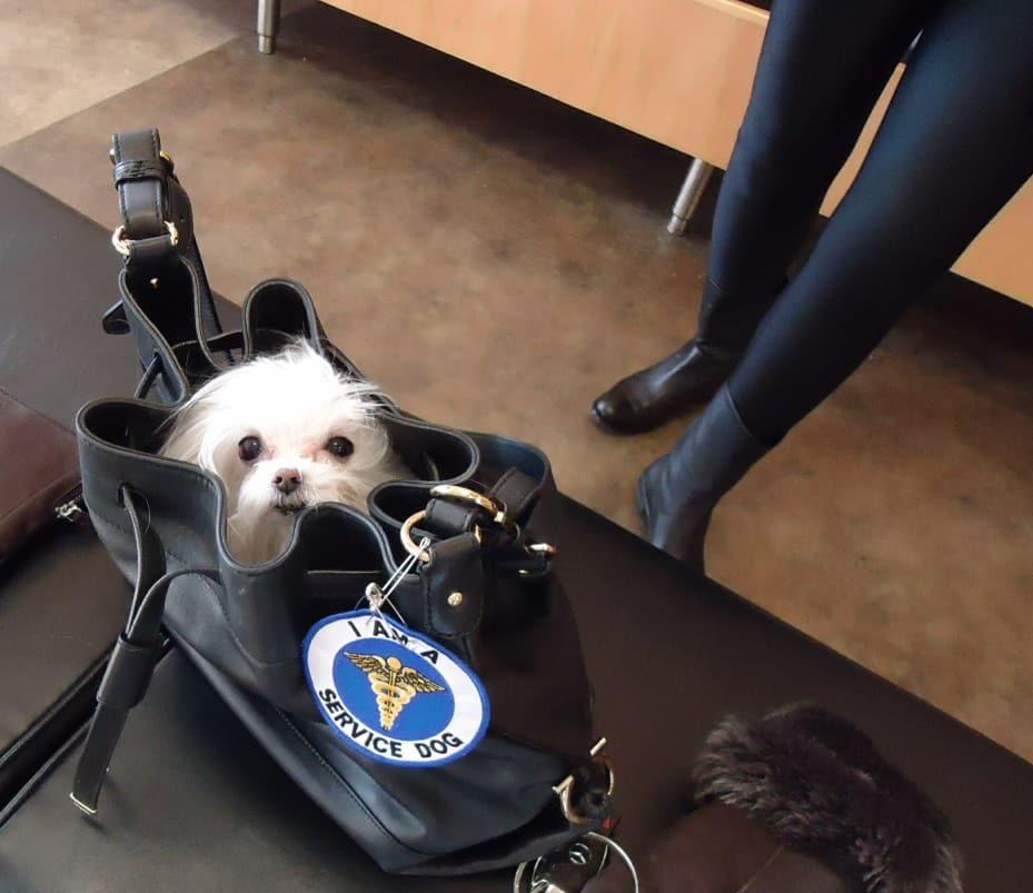 A kutyás táska remek ajándék